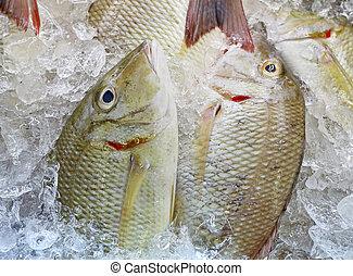 świeża ryba, produkty morza, targ