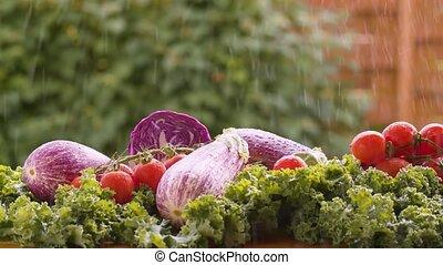 świeża zielenina, pod, deszcz