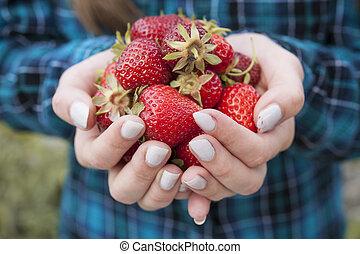 świeże truskawki, dzierżawa wręcza