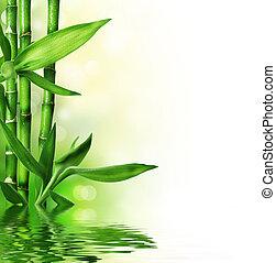 świeży, bambus