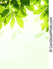 świeży, liście, lato