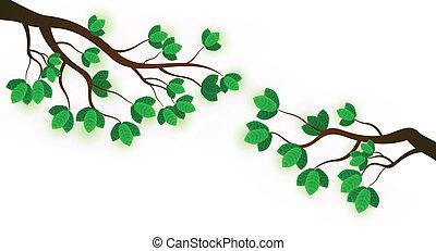 świeży, liście, zielony, gałąź