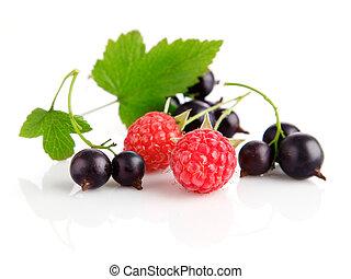świeży, liście, zielony, jagoda, owoce