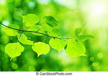 świeży, liście, zielony, nowy
