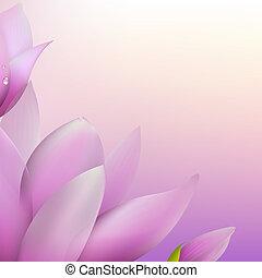 świeży, magnolia