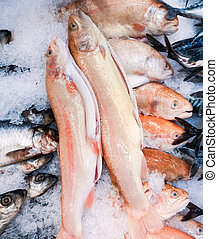 świeży, pstrąg, łosoś, fishmarket