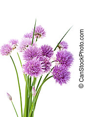 świeży, szczypiorek, (allium, schoenoprasum)