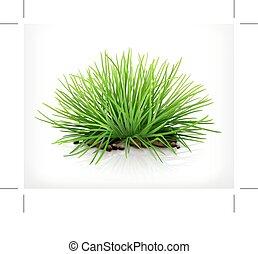 świeży, trawa, zielony
