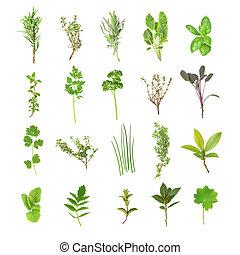 świeży, wybór, ziele
