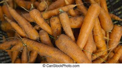 świeży, zagroda, marchew, organiczny