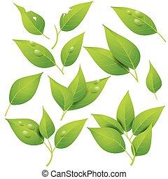 świeży, zielone listowie, zaprojektujcie element