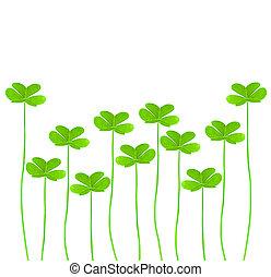 świeży, zielony, koniczyna