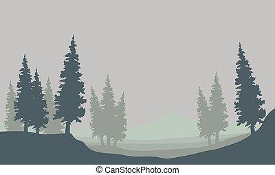 świerk, mgła, sylwetka