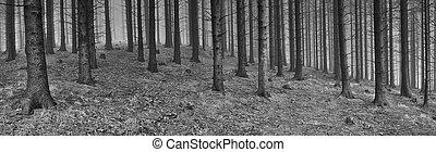 świerk, panorama, las, wiosna