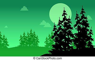 świerk, sylwetka, las, krajobraz, noc