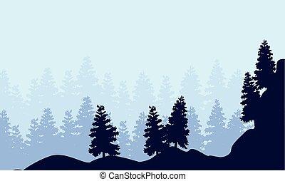 świerk, sylwetka, las, krajobraz
