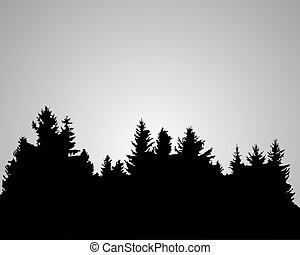 świerk, sylwetka, las