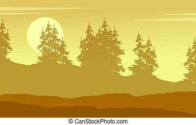 świerk, sylwetka, las, zbiór