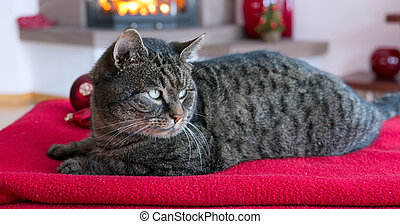 šedivý, poduška, kočka, lies, flame., krb, červeň