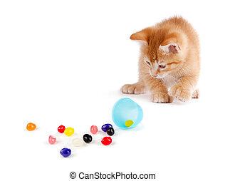 šikovný, odtok, barvitý, vejce, osamocený, výtvarný, grafické pozadí., jellybeans, kotě, pomeranč, neposkvrněný, velikonoční, aut