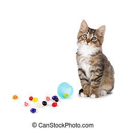 šikovný, sedění, vejce, rozlený, mourek, osamocený, dále, grafické pozadí., jellybeans, kotě, neposkvrněný, velikonoční, aut