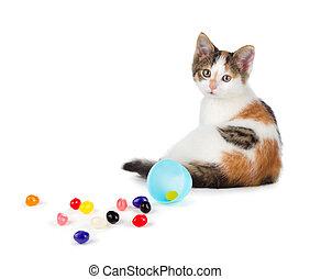 šikovný, sedění, vejce, rozlený, osamocený, dále, grafické pozadí., jellybeans, kotě, neposkvrněný, velikonoční, kaliko, aut