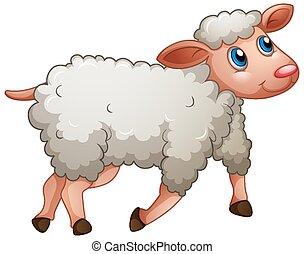 šikovný, sheep, běloba grafické pozadí