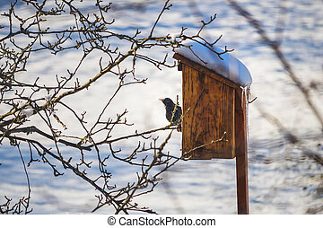 špaček, filiálka, strom, birdhouse, sedění