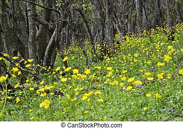 żółte kwiecie, w, przedimek określony przed rzeczownikami, las