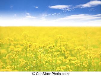 żółty kwiat, w, pole, i błękitny, niebo, tło