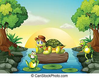 żółw, żaby, rzeka, dwa
