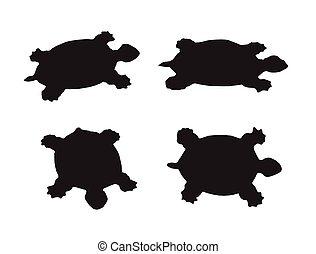 żółw, biały, wektor, grupa, tło