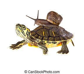 żółw, leniwy, dźwig, ślimak