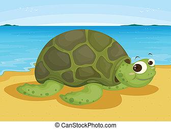 żółw, na, morski brzeg