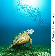 żółw, podwodny, morze, głęboki