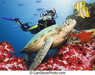 żółw, podwodny, zielony