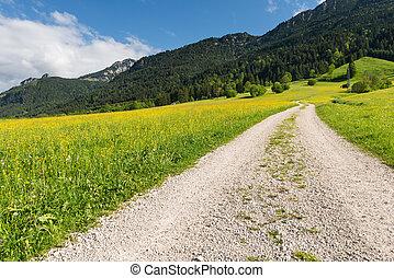 żwirować ścieżkę, w, lato, krajobraz, z, góra, i, las, w, tło