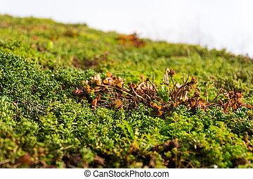 żyjący, szczegół, dach, zielony, pokryty, obszerny, roślinność