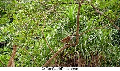 żyjący, tropikalny, małpa, video, dziki, 4k, dżungla, las, ...