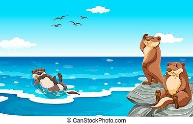 żyjący, wydra, morze, ocean