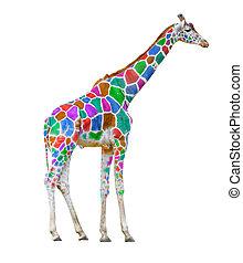żyrafa, barwny