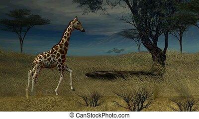 żyrafa, pieszy, przez, przedimek określony przed rzeczownikami, dżungla