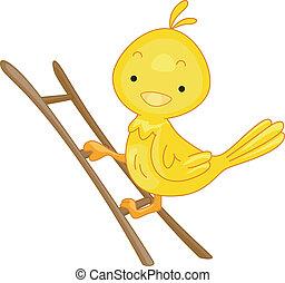 žebřík, ptáček