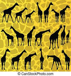 žirafa, detailní, silhouettes, grafické pozadí, vektor