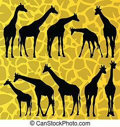 žirafa, detailní, silhouettes, ilustrace, vybírání