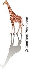 žirafa, s, stín