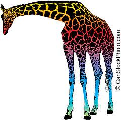 žirafa, -, vektor, abstraktní, duha