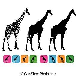 žirafa, vektor, silueta