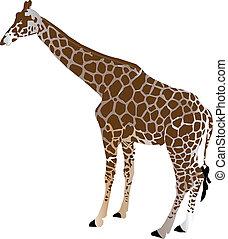 žirafa, -, vektor