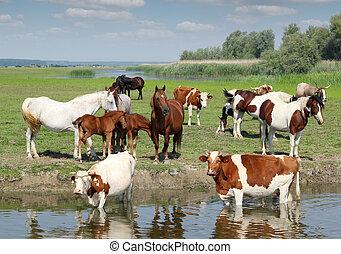 živočichy, farma